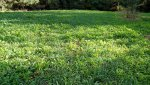 Big Food Plot2 10-24-15.jpg