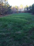 Food plot pic 1.JPG