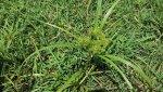 weed1.2.jpg